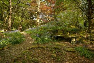 Garden bluebells